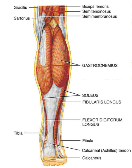 Running Injuries Simplified Achilles Tendinopathy