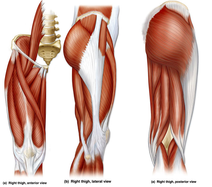 Upper Thigh Something To Think About: RUNNING INJURIES SIMPLIFIED: IT Band Syndrome